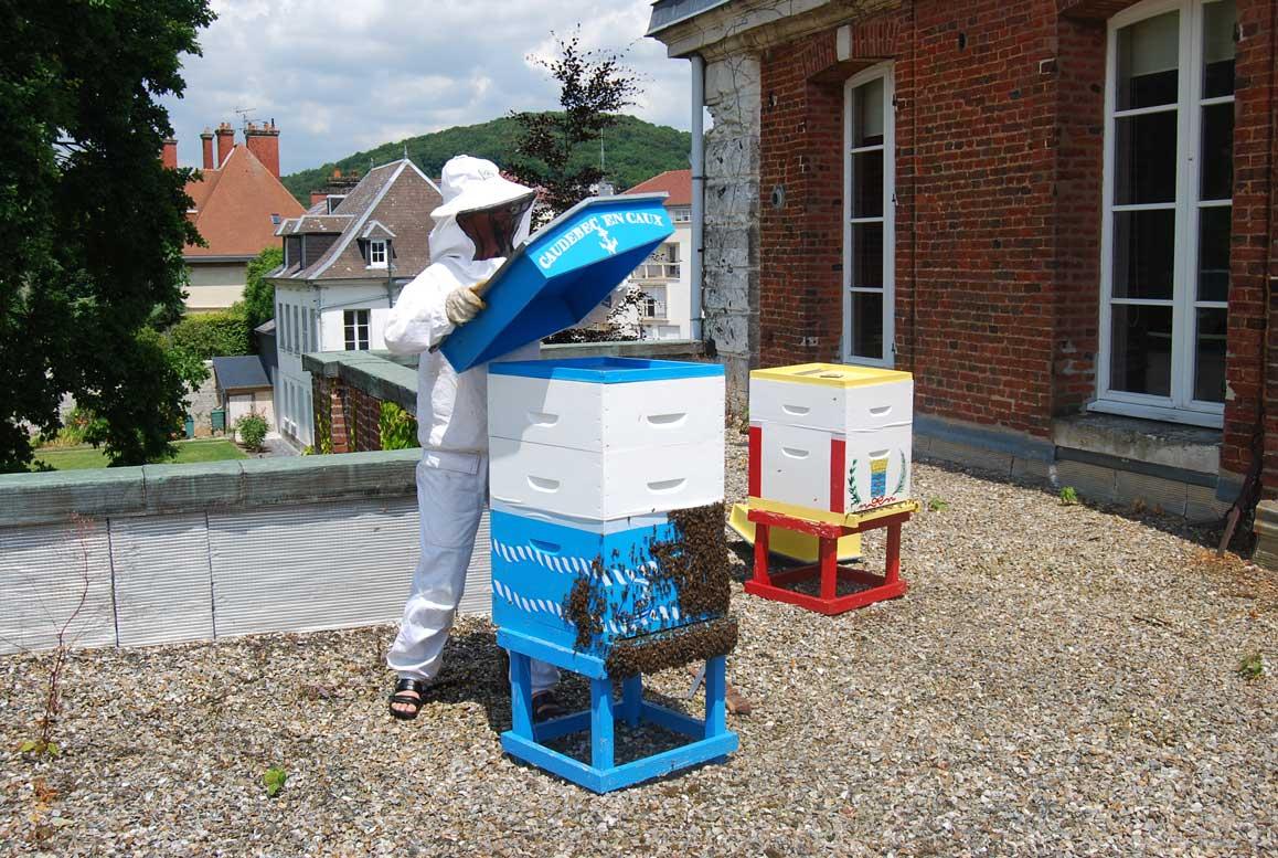 développement durable abeilles